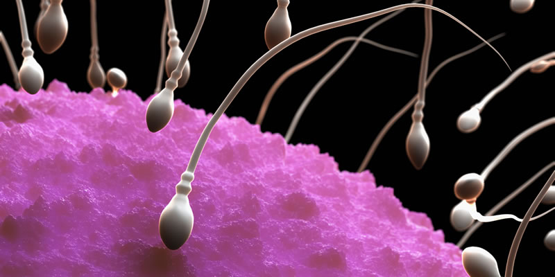 natural killer cells Do sperm-derived factors activate endometrial NK cells